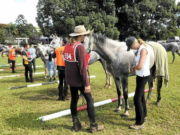 Vets check horses returning from the trail in a previous endurance event in the Mary Valley. This year's event has been postponed due to extreme weather events.