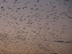 Councils welcome flying fox decision
