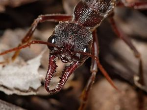 Dry weather sees ants marching one-by-one into residences