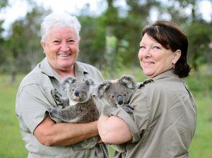 $10,500 grant to boost Ipswich Koala Protection Society