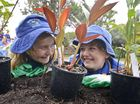 Ruby Lyons and Bree Freeman of Palmers Island Public get down in the dirt at the first planting of the Edible Yamba Project in Ford Park.