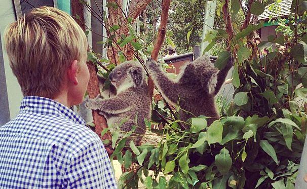 Ellen DeGeneres with koalas at the Taronga Zoo.