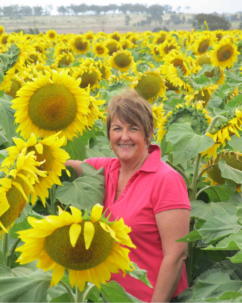 MAGNIFICENT CROP: Shiri Sinton is dwarfed by the magnificent crop of Ausi Gold 62 oilseed sunflowers grown on her family's property west of Allora.