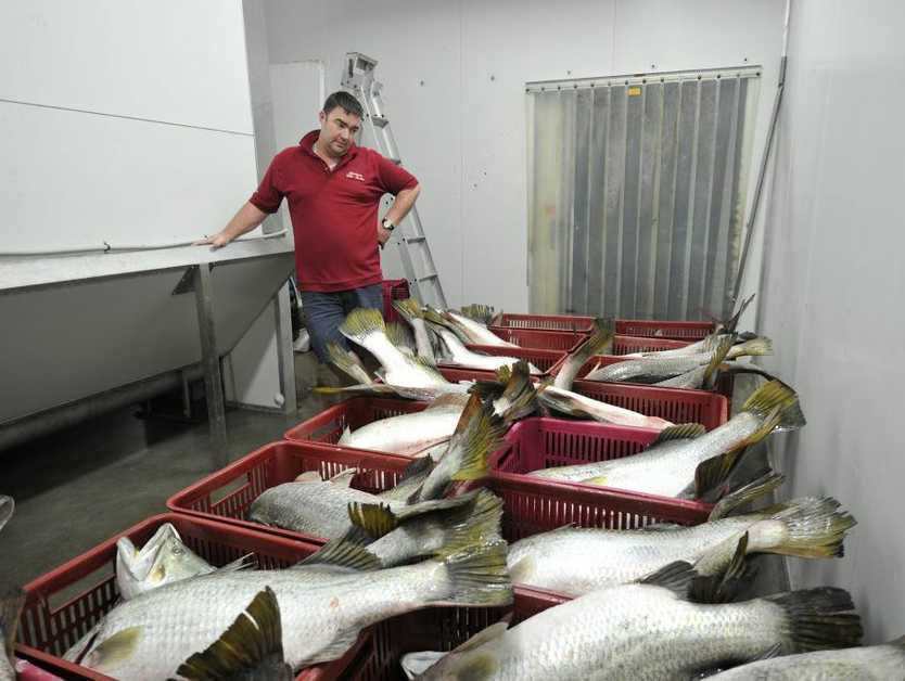 Simon Whittingham at Gladstone Fish Market with a 600kg catch of diseased fish that he had to reject in 2011.