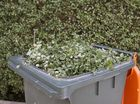 Green light for Rocky greenwaste after 2013 asbestos find