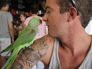 Squawk found far from home thanks to Facebook