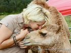 Abbie Vievers of Junction View with her pet camel Humphrey who alerted her family to the rising flood waters on Australia Day. Photo: David Nielsen / The Queensland Times