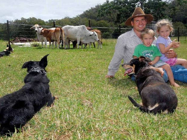 ON THE JOB: Clint Burke's working dogs keep watch while his children Darcy, 2, and Bella, 4, relax. He said his dogs were essential for him to be able to manage his Kuttabul breeding property.