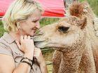 Humphrey the heroic camel
