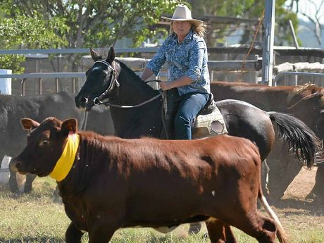 Sharon Keogh in the Southern Downs Team Penning competition.