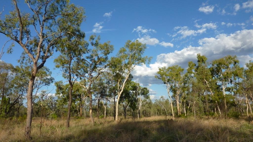 Bimblebox Nature Reserve