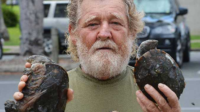 Fisherman Wally Keating, with some of the turtles found dead at Plane Creek, near Sarina.
