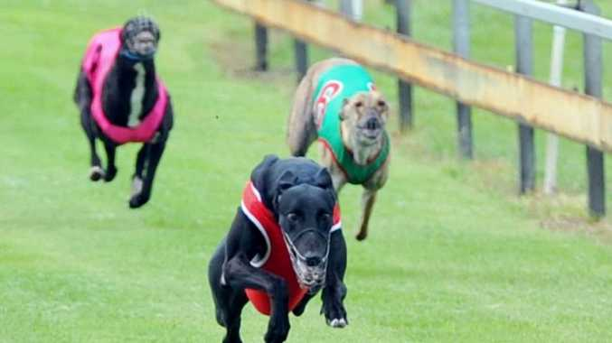 Investigation finds 72 Australian dog owners and trainers have exported dogs for racing in Asia.