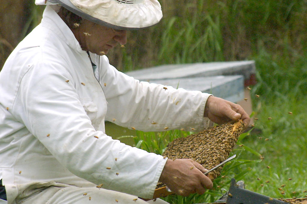 A beekeeper role is one of five going in Toowoomba this week.