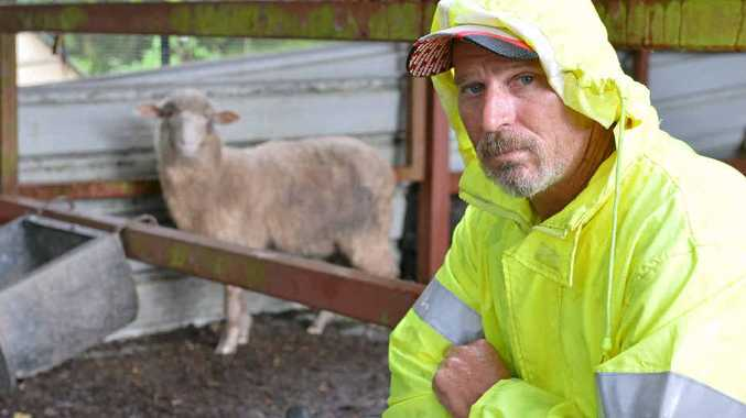 Chris Costello with a lone lamb after dingoes killed three of his sheep overnight.