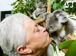 Koalas get second chance thanks to volunteer rescuer