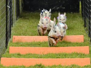 Pig races hamstrung by rain