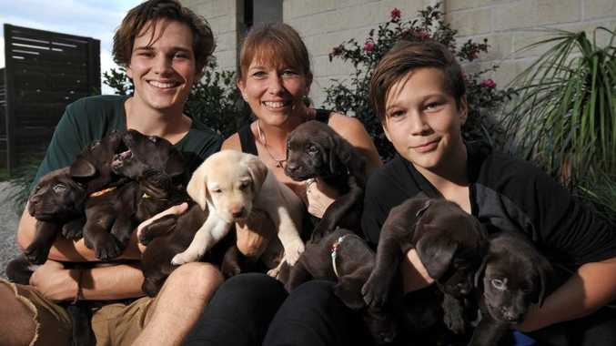 Pam Hooper with sons (left) Lachie, 16, and Chris, 13, holding the sole yellow labrador from a litter also containing eight chocolate labs; the yellow puppy has been sold, along with one of its brown brothers and sisters, to Seeing Eye Dogs Australia.