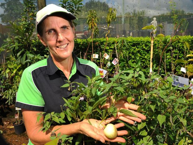 GROW YOUR OWN: Kerry Borg with a Pepino plant and a Cape Gooseberry plant. Fruit and vegetables can easily be grown from kitchen scraps in your home vegie garden. Photo: Mike Knott / NewsMail
