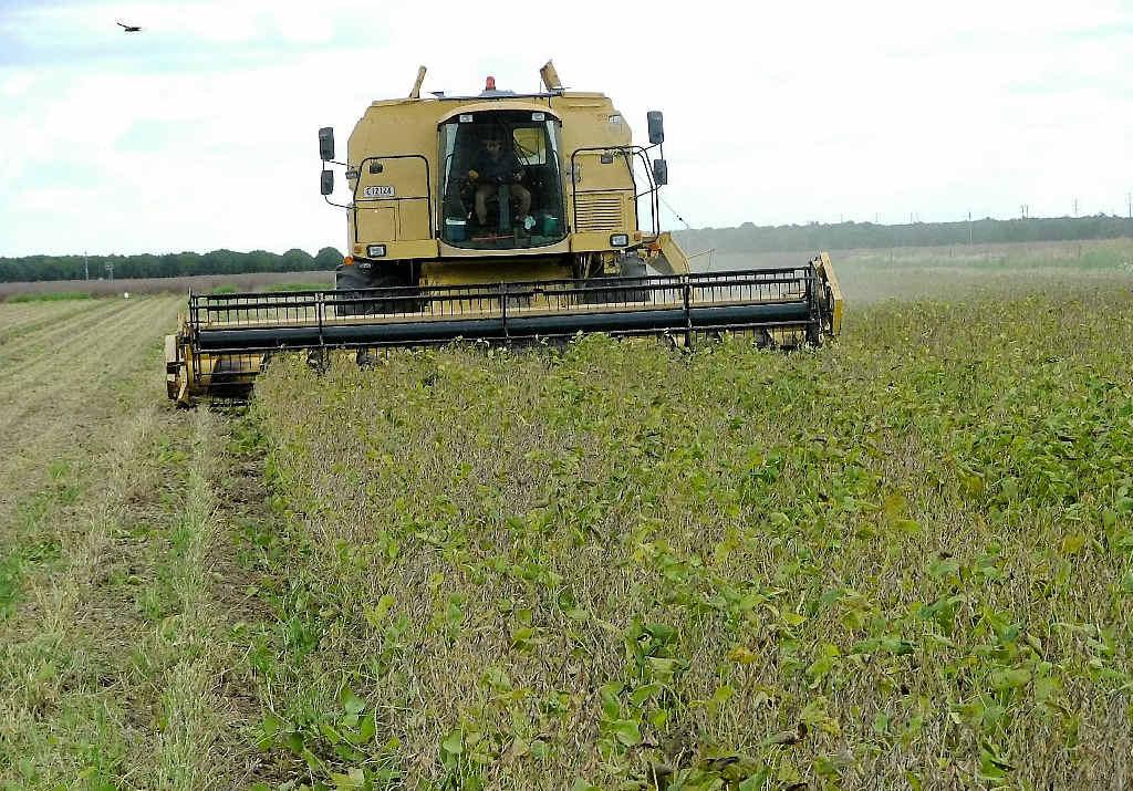 PROFIT BOOST: The soybean harvest gets under way in the Bundaberg region.