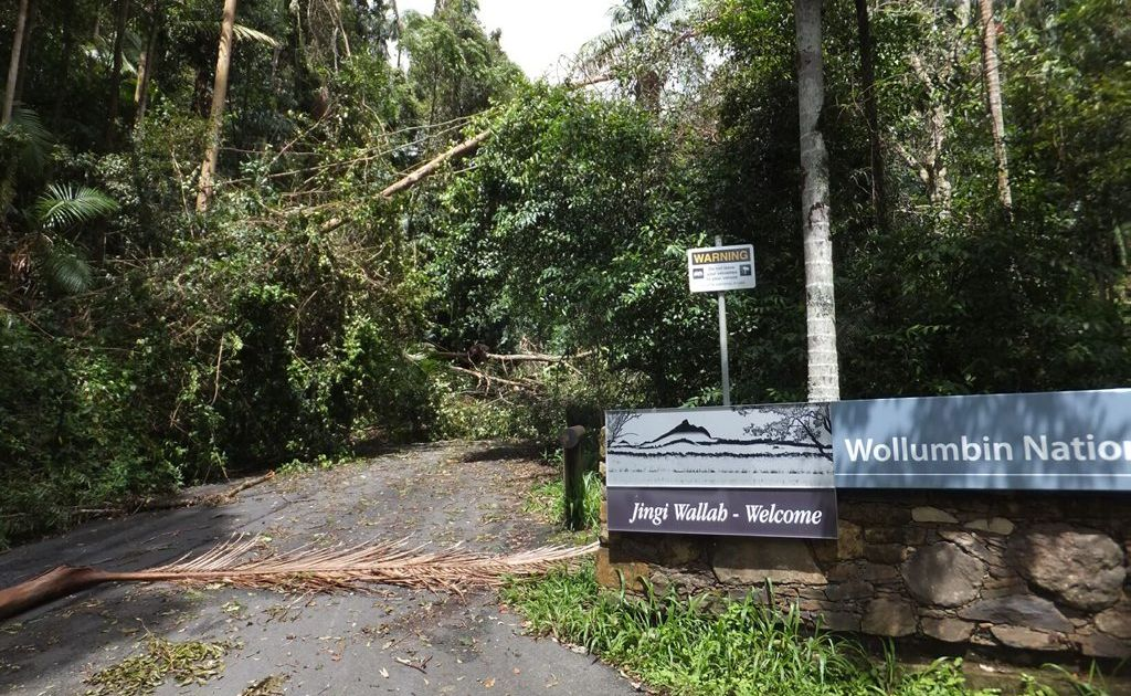 Mt Warning is closed and the National Parks and Wildlife Service don't want you risking your life by going in.