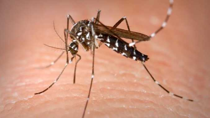 Coffs Coast residents are warned mosquitoes are breeding up in large numbers of recent heavy rain.