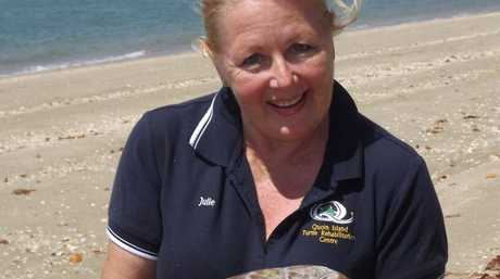 BE FREE: Julie Holland holding Alex, the eighth turtle to be released from the Quoin Island Turtle Rehabilitation Centre.