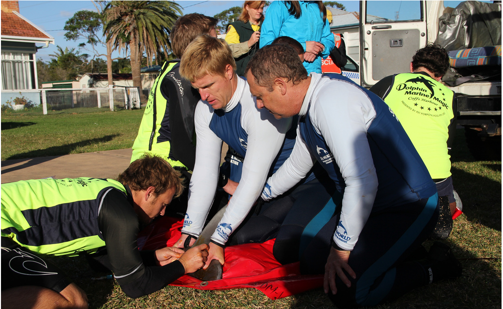 A wildlife rescue team from Coffs Harbour took part in Thursday's dolphin release.