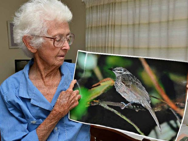 Marj Andrews has led intrepid bird watchers from all around the world to the Clark Range west of Mackay for more than 15 years.