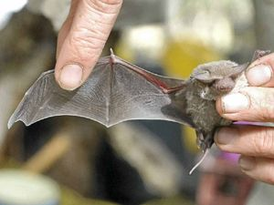 Be alert but not alarmed - tiny little bats heading our way