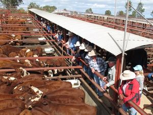 Queensland beef to be promoted in China