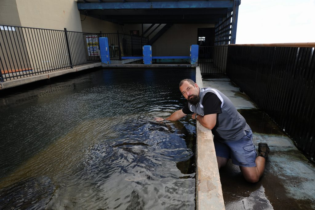 Greg Wolff at the family-owned business Neptunes Reef World where thieves attempted to steal a shark.