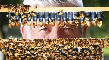Beekeeper Trevor Weatherhead is executive director of the Australian Honey Bee Industry Council.