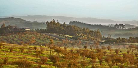 New Zealand's largest truffle plantation up for sale