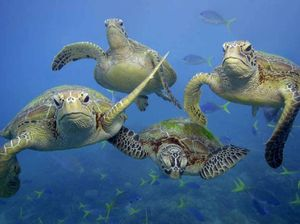 Turtles released into wide after half a year of rehab
