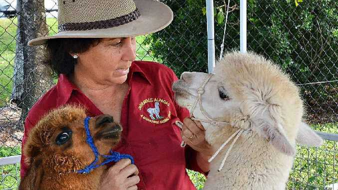Josie Bugeja, of Jarravale, showcases two of her beloved alpacas, Latte (left) and Wynston at the Ag.Trade.Life show yesterday.