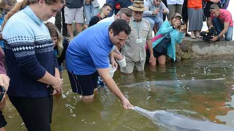 Environment Minister Andrew Powell feeds dolphins at Tin Can Bay