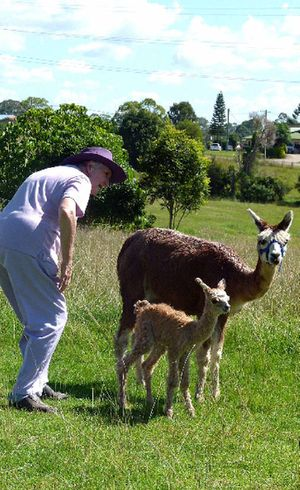 Dawn Perryman checks out one-day-old alpaca Suri and her mother.