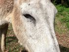 Support for Rowenna the donkey