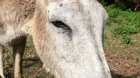 Rowenna the donkey was punched in the face by someone who filmed the act and posted the video on Facebook.