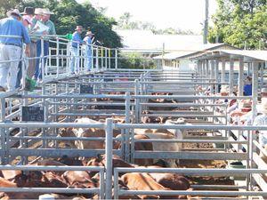 Central Highlands stock gets offloaded