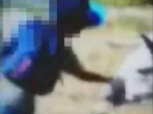 Donkey punch Facebook video sparks RSPCA investigation