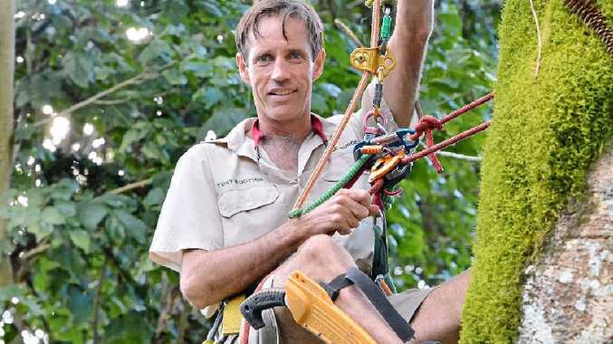 TALL ORDER: Arborist Tony Wootton of Maleny says crowds often gather to watch him work.
