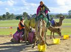 Colourful camel races in Gladstone a fashionable affair