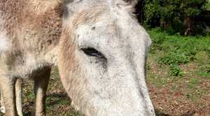 Rowenna the donkey was punched in the face by someone.