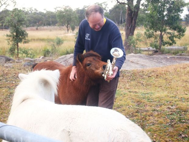 Robert Channon of Robert Channon Wines at Stanthorpe teaches Shiraz the miniature horse to play the trumpet, ahead of the annual Brass and Wine Day this Saturday.