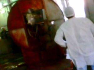 Shocking video of animal cruelty
