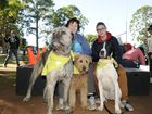 RSPCA walkers dressed to the ca-nines