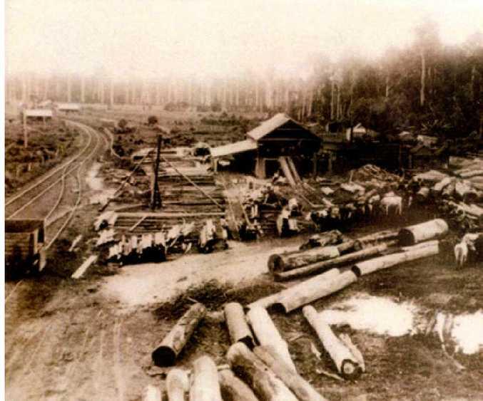 Mullumbimby Saw Mill 1903