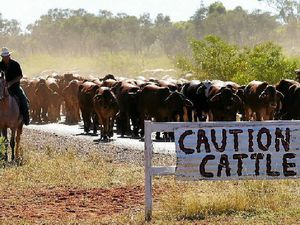 McVeigh stands for Qld farmers whose cattle need to graze
